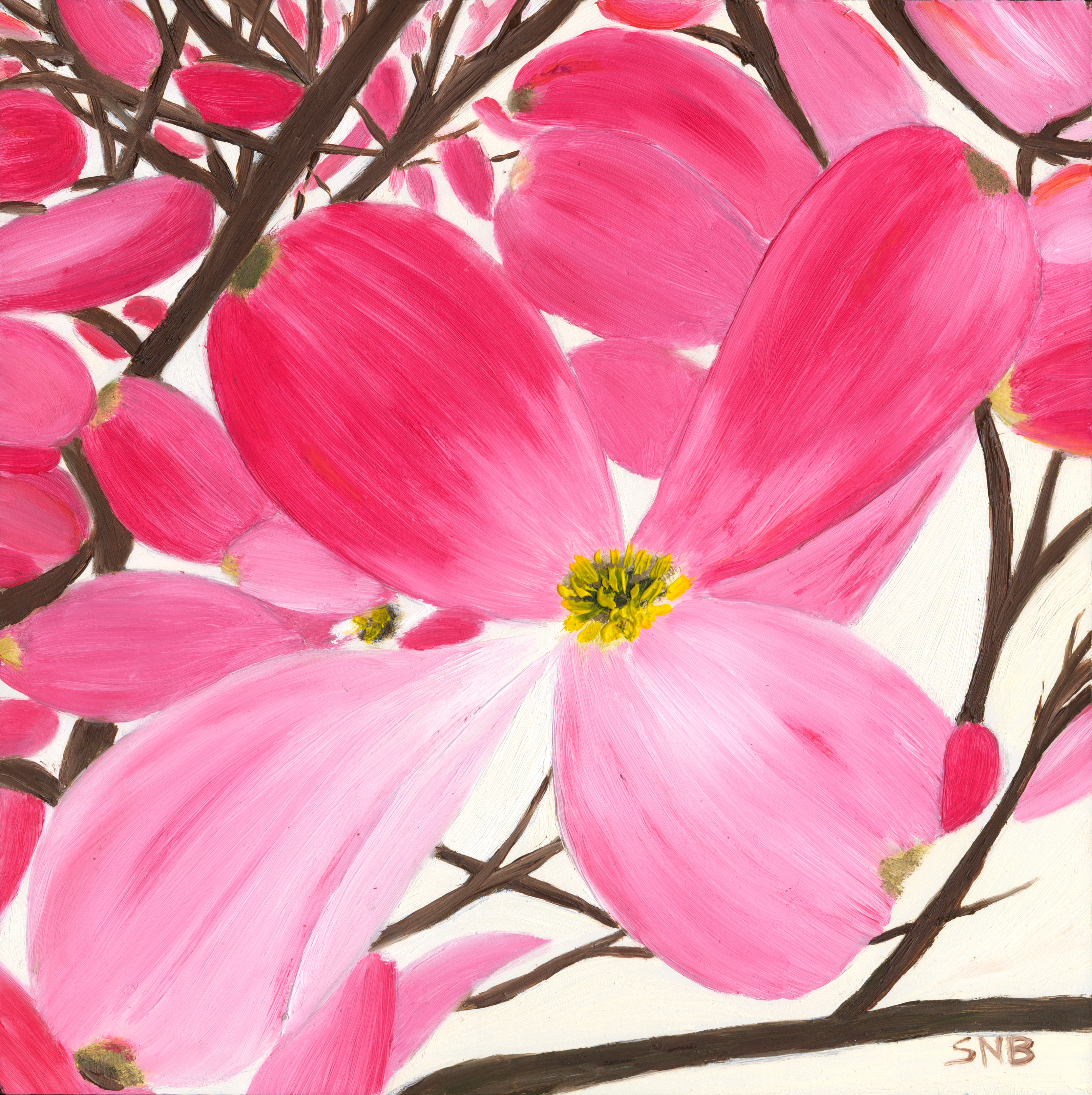 Dogwood Bloom, an 8 x 8 Oil Painting on Canvas. The Painting is of a large pink dogwood bloom on a tree branch with multiple blooms and branches in the background painted on an off white background